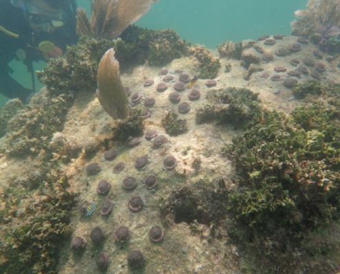 plant a million corals foundation